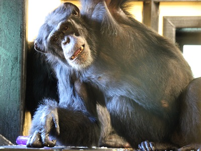 DentalEZ Donates Dental Equipment and Supplies to Project Chimps